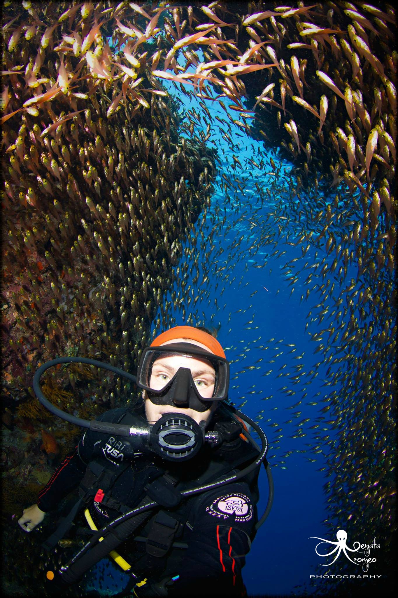 Red Sea Daily diving packages