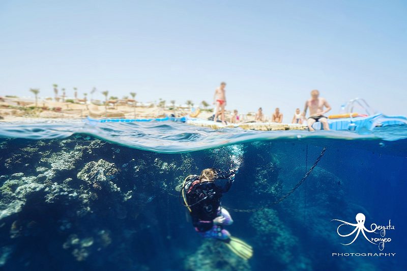 Split pic of diver and coral reef diving in the Red Sea from Monte Carlo resort