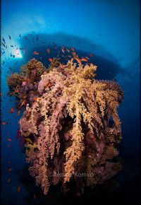 Red Sea Special dive trips